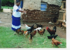woman_and_chickens[1] (1)